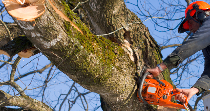 The Three-Step Guide To Fast And Safe Tree Removal Residents Can Follow