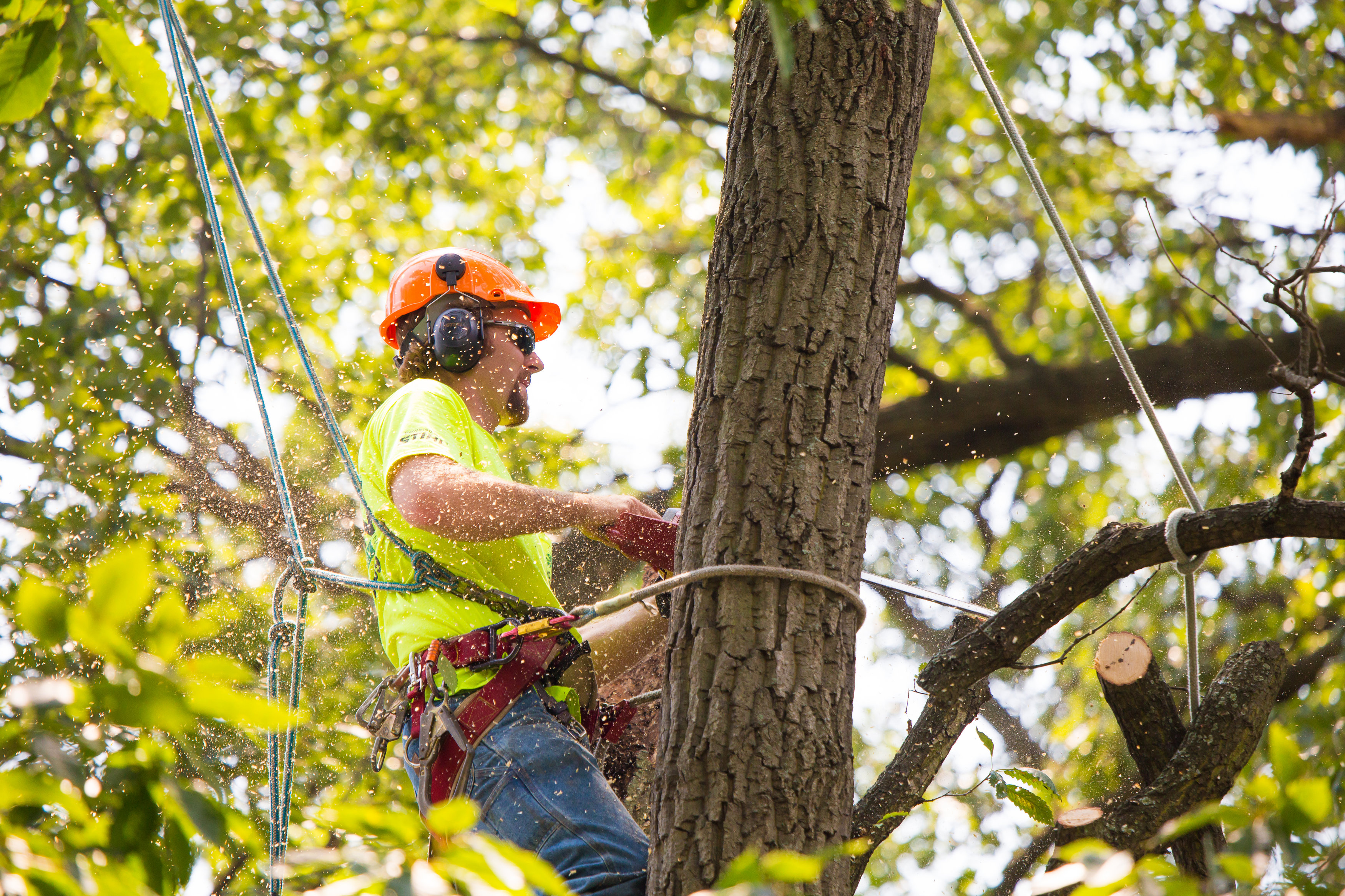 Tree Trimming Tips That Will Help You Trim Your Tree Fast and Easy